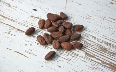 La culture du cacao à Madagascar