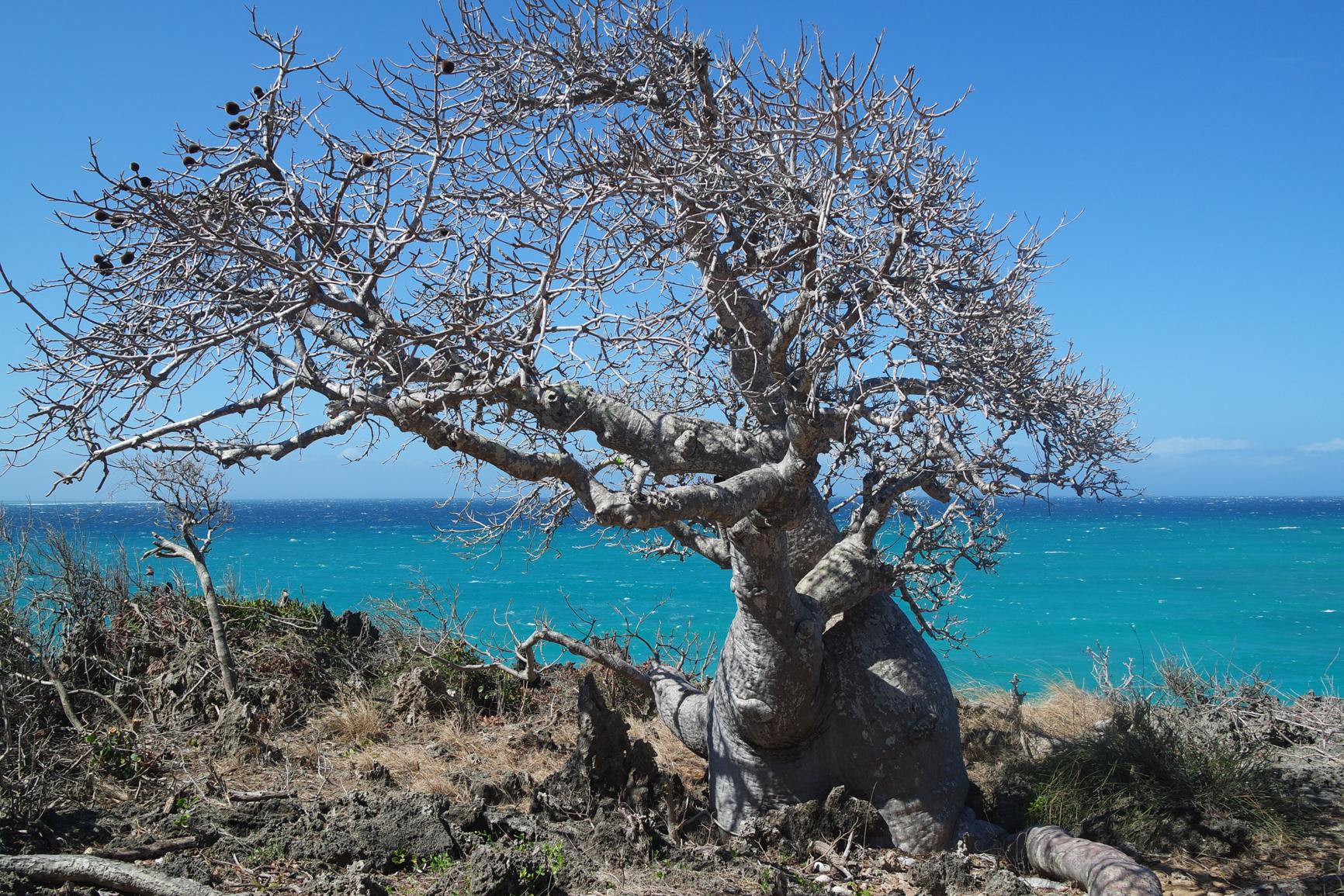 Diego - arbre