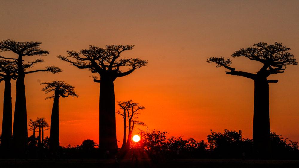 Morondava - Coucher de soleil sur les Baobabs
