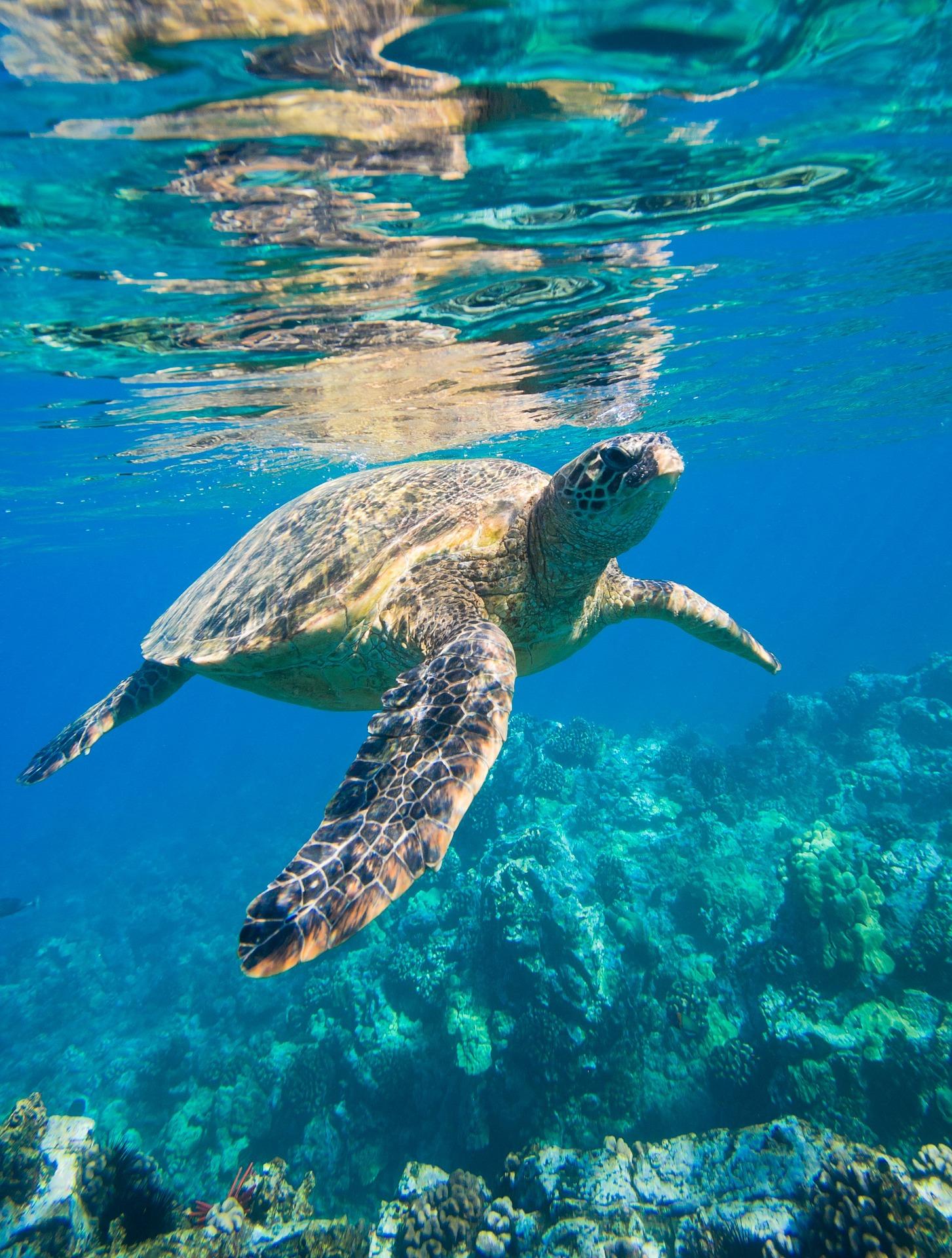 Madagascar - Tortue de mer