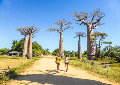 Morondava - voyageurs allee des baobabs