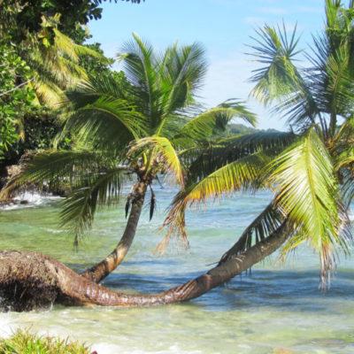 Sainte Marie - Mer et palmiers