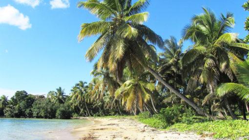 Sainte Marie - plage, palmiers