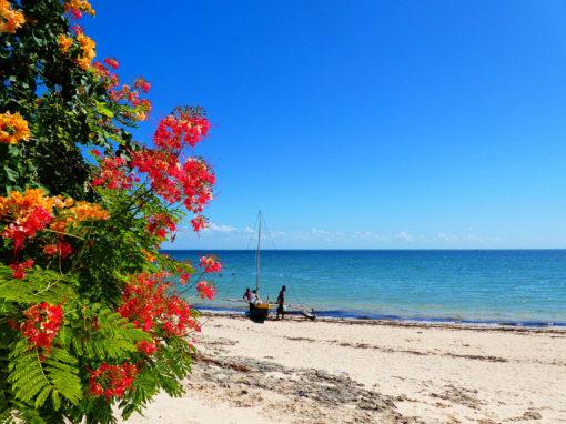 Mangily - plage et fleur