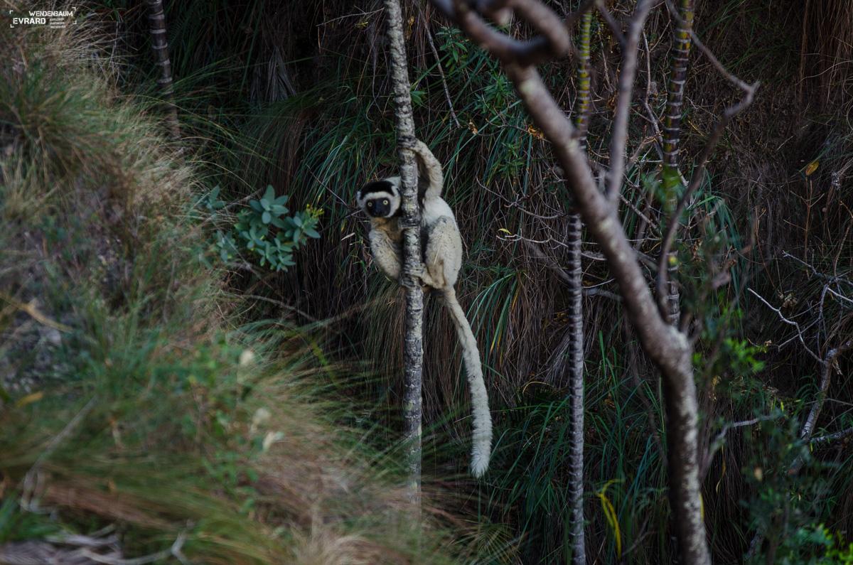 Madagascar - Makay