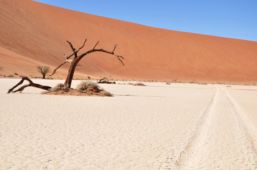 Namibie - Desert du namib Sossusvlei (dead valley)