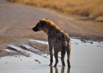 Namibie - safari a Etosha 37