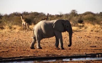NAMIBIE – Séjour itinérant aux couleurs de l'Afrique australe (11 jours)