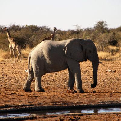 Namibie - safari a Etosha 5