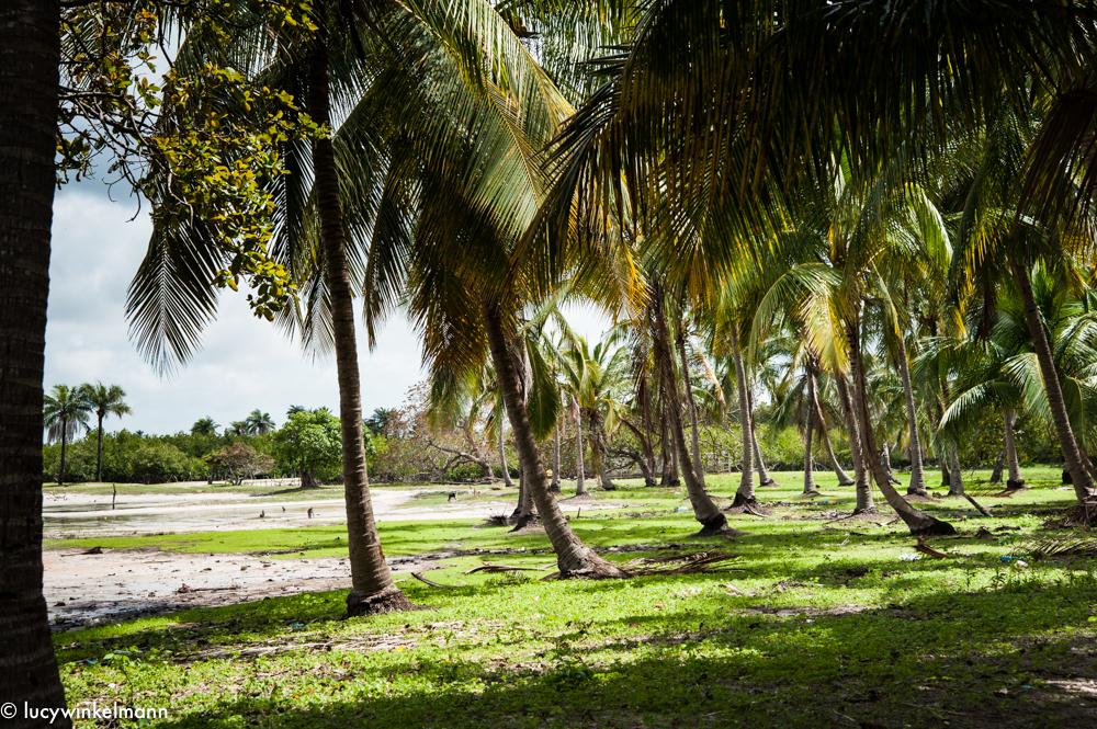 Sénégal - Carabane