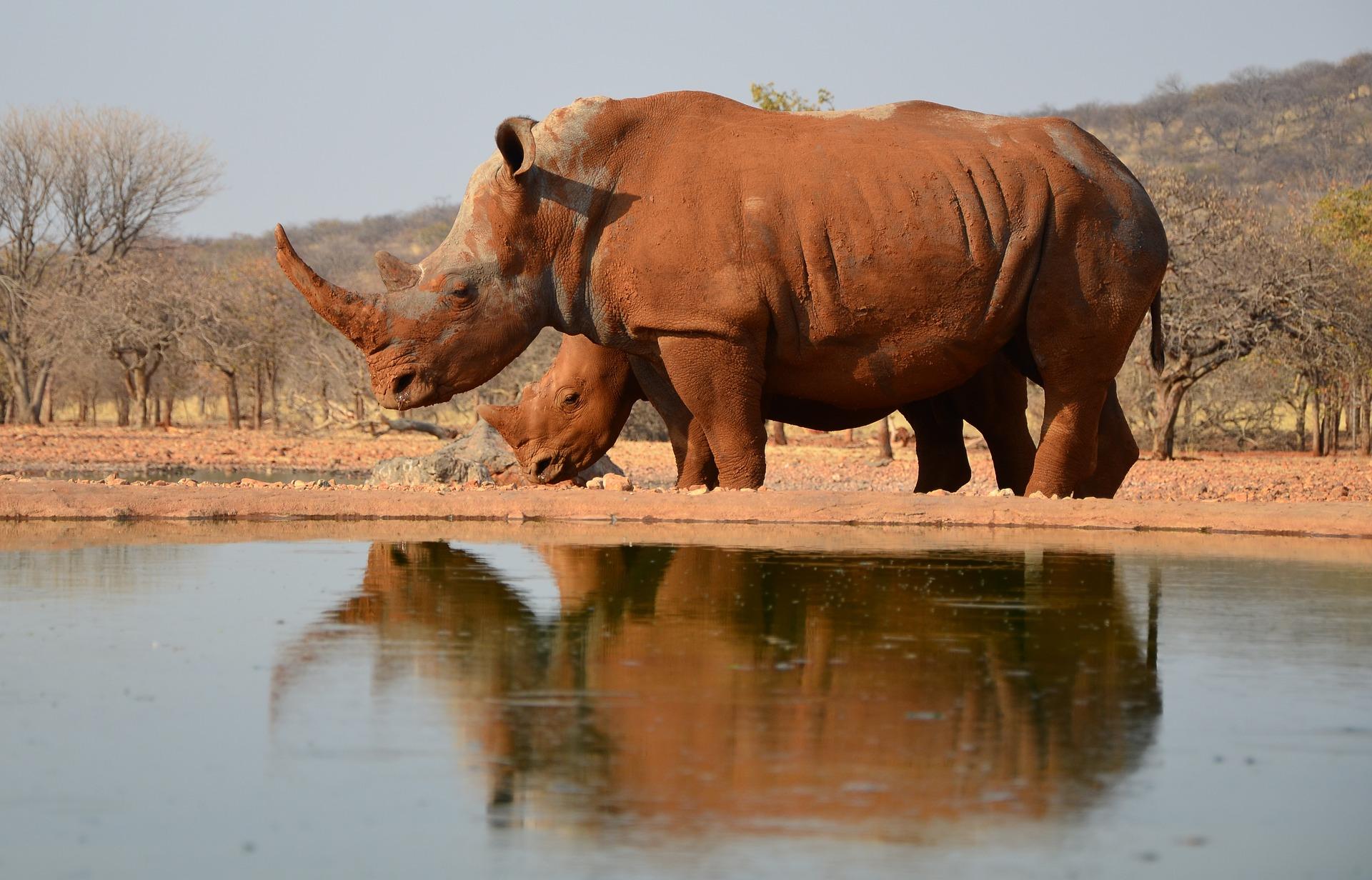 Namibie - rhinoceros