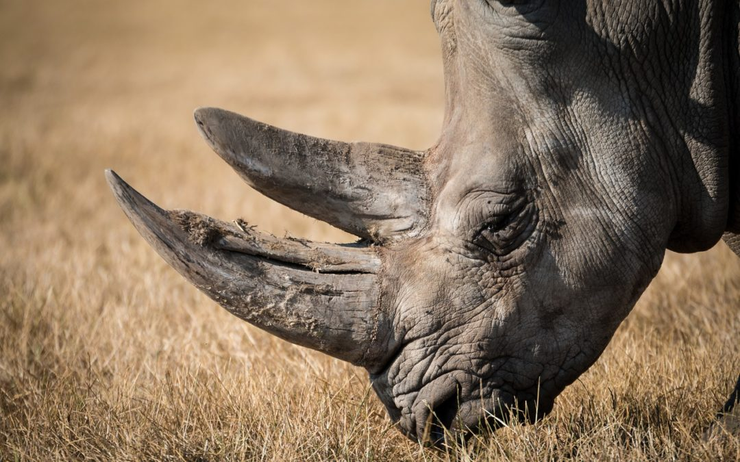 Quel est le point commun entre un léopard, un lion, un buffle, un éléphant et un rhinocéros ?