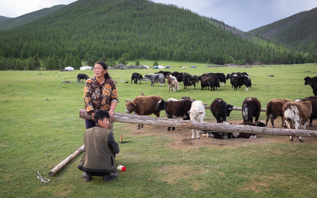 Nomades mongols, une vie entre tradition et modernité